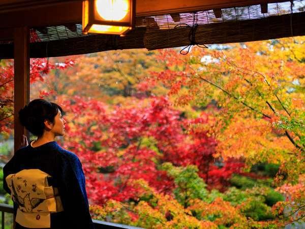 秋の庭園忍庵で寛ぐひととき/紅葉は10月下旬~11月中旬頃