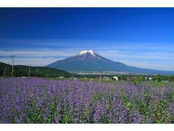四季折々の富士の景色に感動