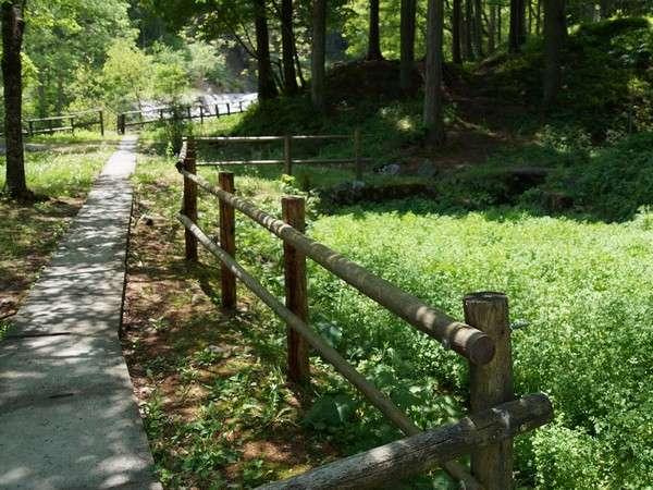 清流小黒川と緑の自然豊かな小黒川渓谷。釣り堀や銘水もございます。(当館より車15分)