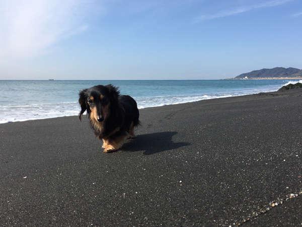 ペットと一緒に海へ!お散歩が気持ちいいですよ~