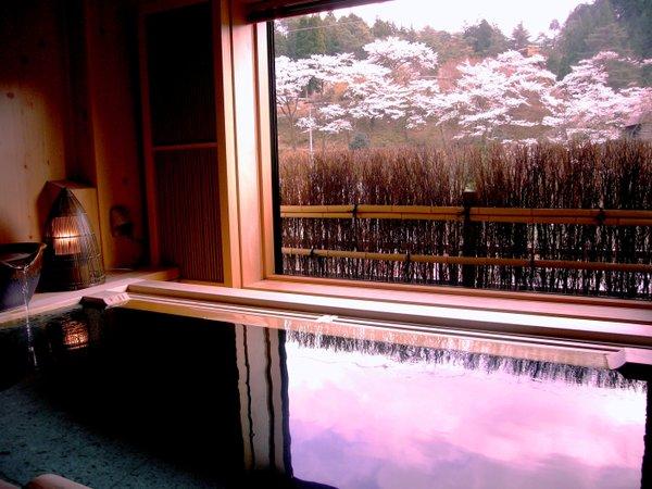 合掌村の桜並木 宵待草の間 湯浴みをしながら