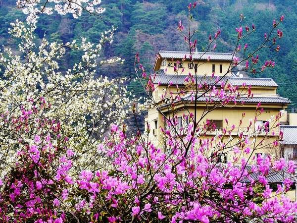 春の水鳳園