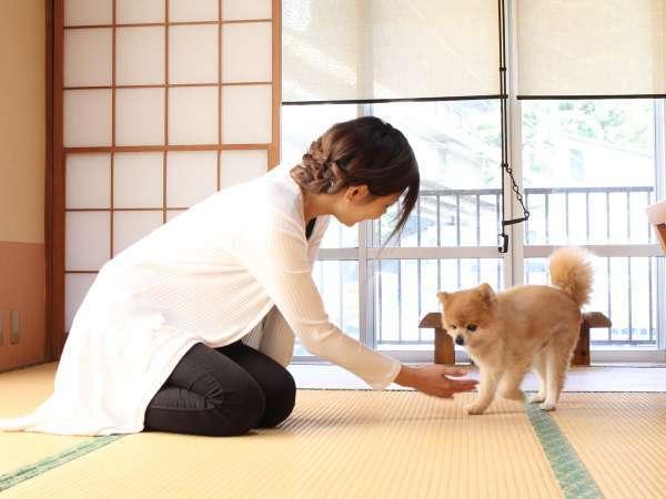 【ワンちゃんと一緒に泊まれる宿】一部のお部屋にて小型犬1匹ご宿泊できます♪