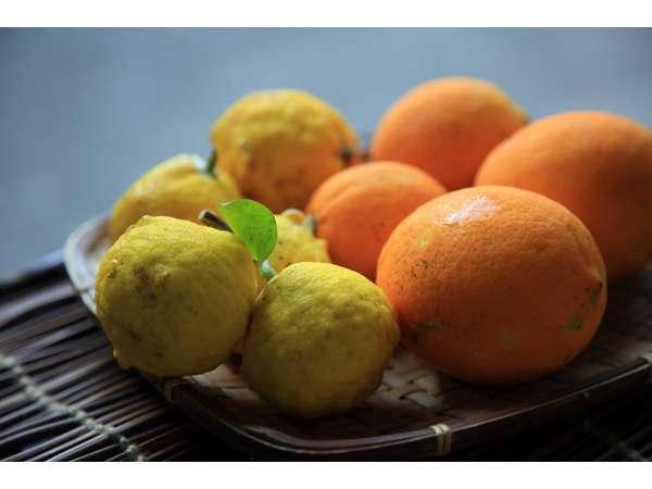 自家菜園の有機レモン&柚子