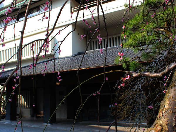 【玄関】しだれ梅と松。きちんと手入れされたお庭のおもてなしに期待が高まります。