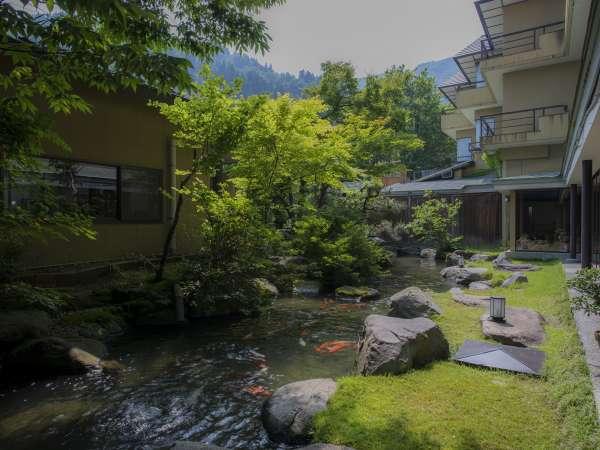 緑のきれいな中庭には鯉がおります。朝の湯上りにキュウリを食べながら美しい中庭をご覧ください。