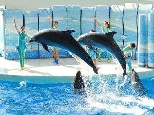 ◇江ノ島水族館のイルカショー!イルカのジャンプは迫力満点