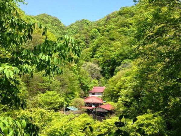 *新緑の時期は山の中なのでとても涼しく過ごせます。水車の鳴る音、水のせせらぎの音に涼を感じます。