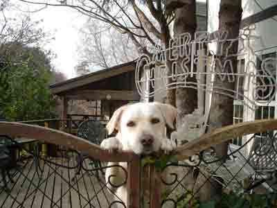 当館のアイドル犬、rブラドールのミルキーちゃんです。とてもおとなしいので遊んでやってください。