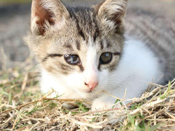 子猫もたくさん生まれています♪可愛い