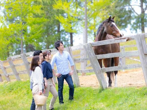 【アクティビティ】施設内の乗馬クラブでは厩舎の見学だけでもお楽しみいただけます