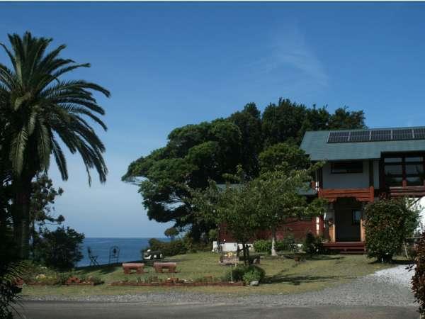 庭からのシンボルツリー(ヤシ)と海と建物