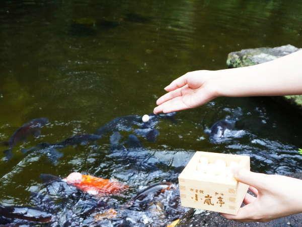 ■庭園内の池には堂々とした錦鯉が泳ぎます