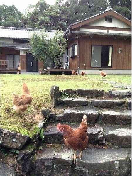 Farm inn Yonekichi