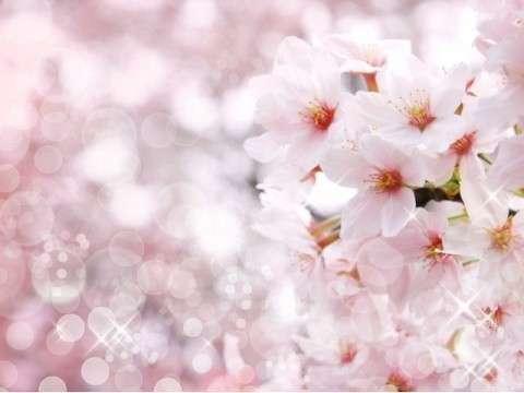 桜の季節が待ち遠しいな 車で10分桜のトンネルくぐって『太平山』までドライブ!