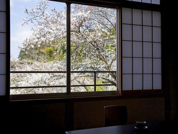 お部屋の窓から見える桜~一部屋のみ~