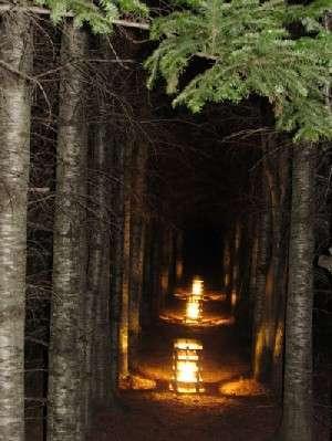田園 冬灯り