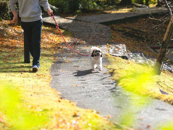 敷地内を愛犬とお散歩♪たまにはちがう散歩道も気持ちいいワン♪