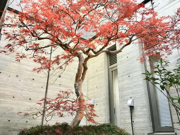 和邸では11~12月にかけて美しい紅葉がご覧いただけます(*^-^*)