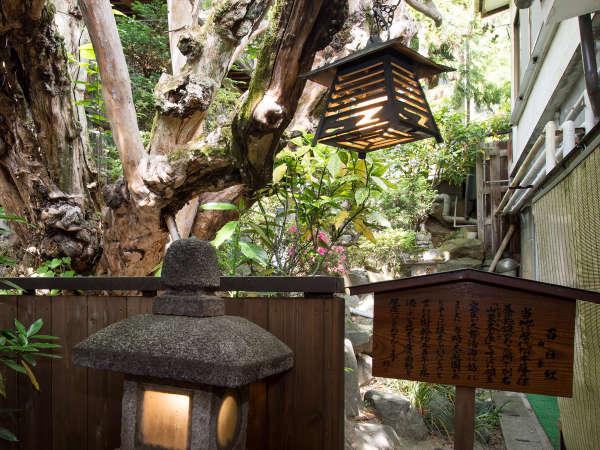 ★中庭では、樹齢約500年の「百日紅」の木がお出迎えします