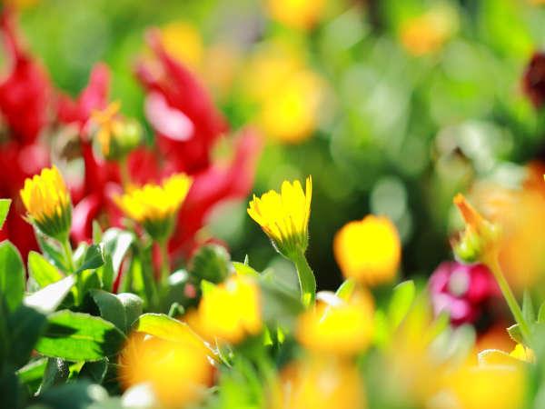 イメージカット/庭先にはオーナーが手入れをするお花たちがお迎え