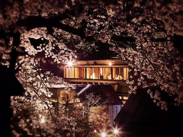いけがみから見える一本桜/ライトアップで美しい桜がお楽しみいただけます