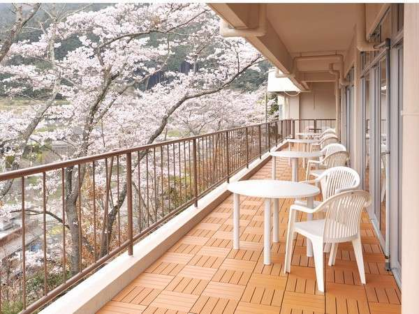 紀伊見荘のテラスは、春に桜で囲まれます。