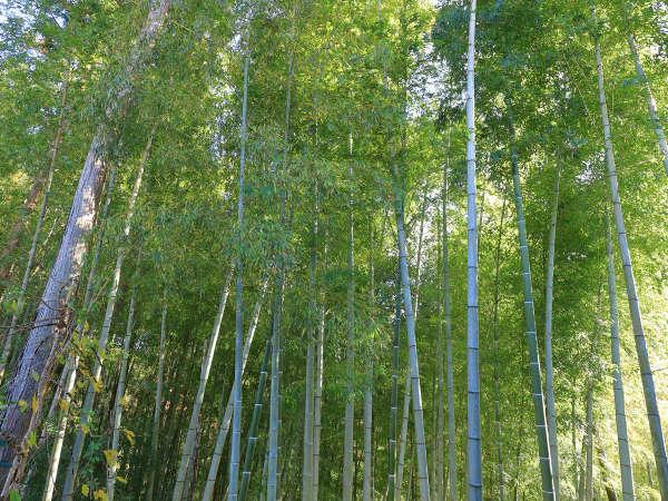 【帰天の湯】露天風呂から見える竹林。「竹取物語」の世界に浸ってリラクスタイムを…