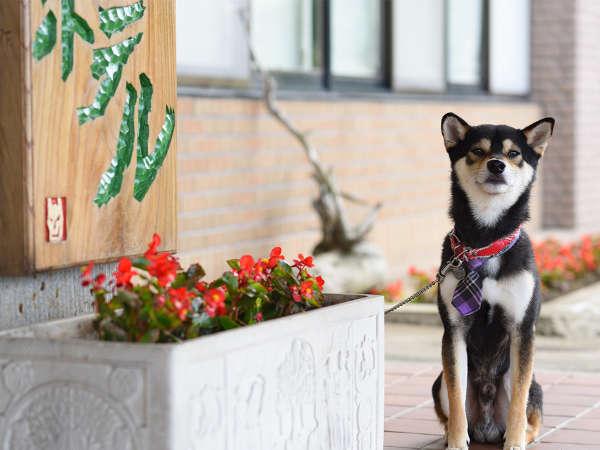 看板犬の柴犬の太郎です!ネクタイでおめかしした姿がまたかわいいでしょう?