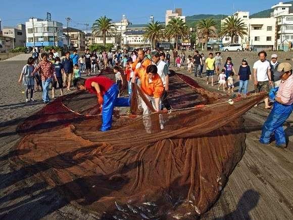 5、6月の毎日曜日の朝、オレンジビーチで無料地引網体験が出来ます。朝食まえにいかがですか?