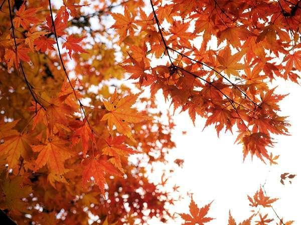 山に囲まれ、例年10月末~11月中旬には美しい紅葉も