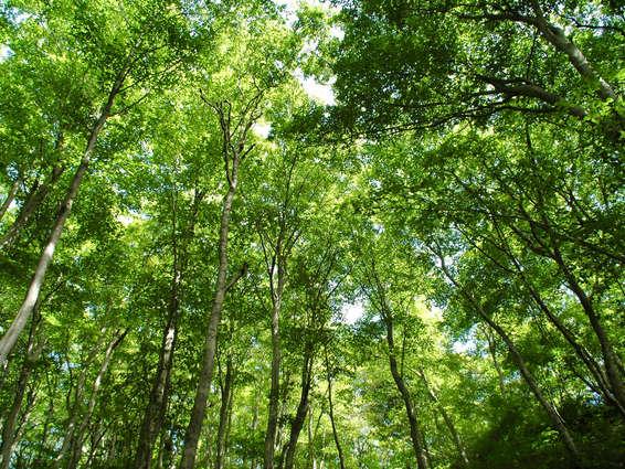 大自然の中の宿「中の湯」は、冷房要らず!緑の力は偉大です。