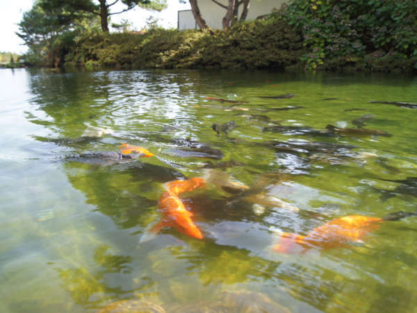 ロビーから、池を優雅に泳ぐ鯉を見ることができます。
