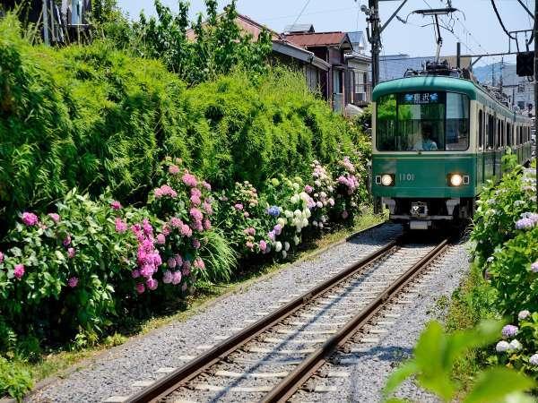 鎌倉には紫陽花の名所が多数あります♪6月が見頃です。