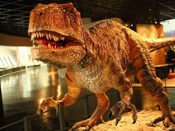 【勝山天然温泉 水芭蕉】恐竜博物館へ最近の気兼ねない温泉宿。2020/12/31新装オープン!