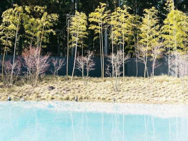 水盤テラスの風景。時間を忘れて水を眺め、日光の静寂な時の流れに身をまかせて。