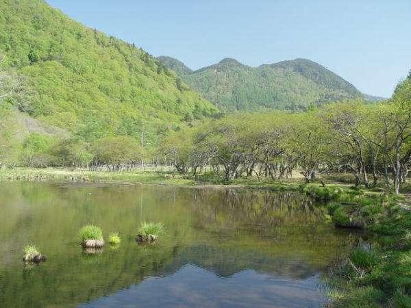 新緑の光徳沼