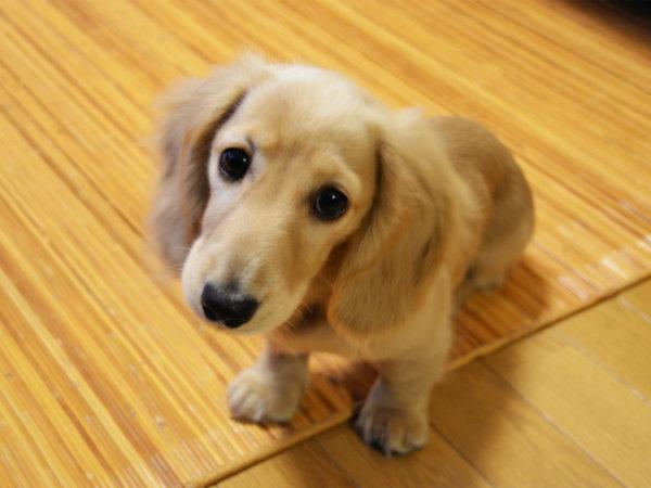 愛犬と一緒にお泊りできるお部屋もございます!