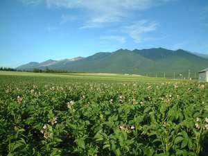 宿の庭からの風景。ジャガイモの花と十勝連峰。これぞ北海道という風景。青と緑のコントラストが美しい。
