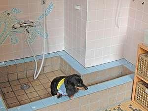 玄関横にあるペット専用の足洗い場