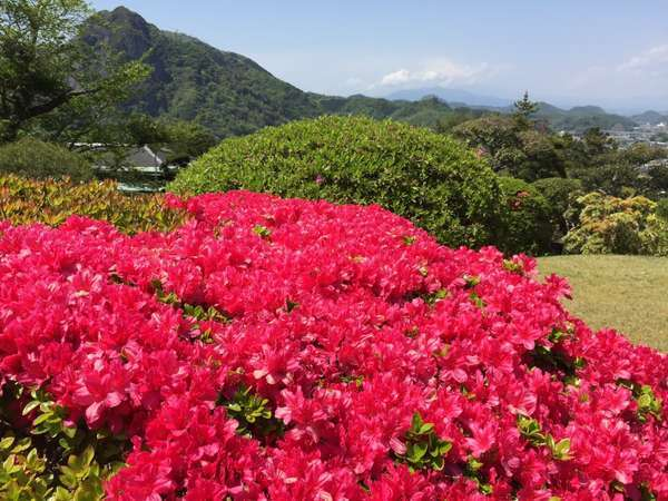 日本庭園には様々は植物が植えられております。
