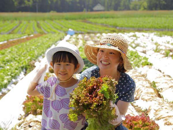野菜の収穫体験!お日にち限定です。