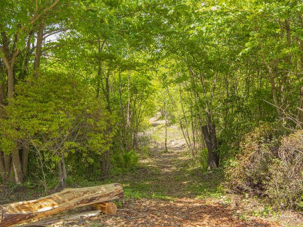 美しい自然に囲まれた遊歩道。季節の花々や野鳥のさえずりに癒されます。