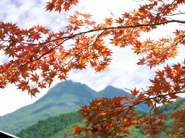 紅葉と由布岳