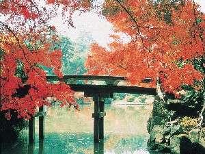 彦根城内玄宮園の紅葉