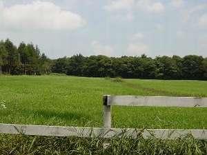 宿の目の前は牧草地。美しい緑を眺めてリラックス