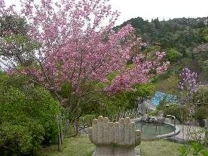 八重桜と叶いの湯