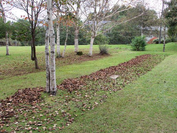 葉っぱふみふみ、庭の落ち葉集め