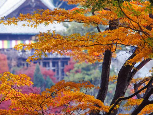 【長谷寺の本道】紅葉は10月中旬~12月上旬までとなり、11月はもみじ茶会も!