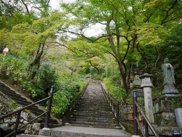 【奈良・長谷寺の青もみじ】まだまだ緑色の青もみじでもうっとりするような美しさ。